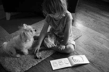 choosing-a-dog