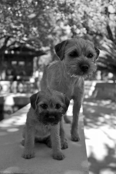 training-options-puppy-training